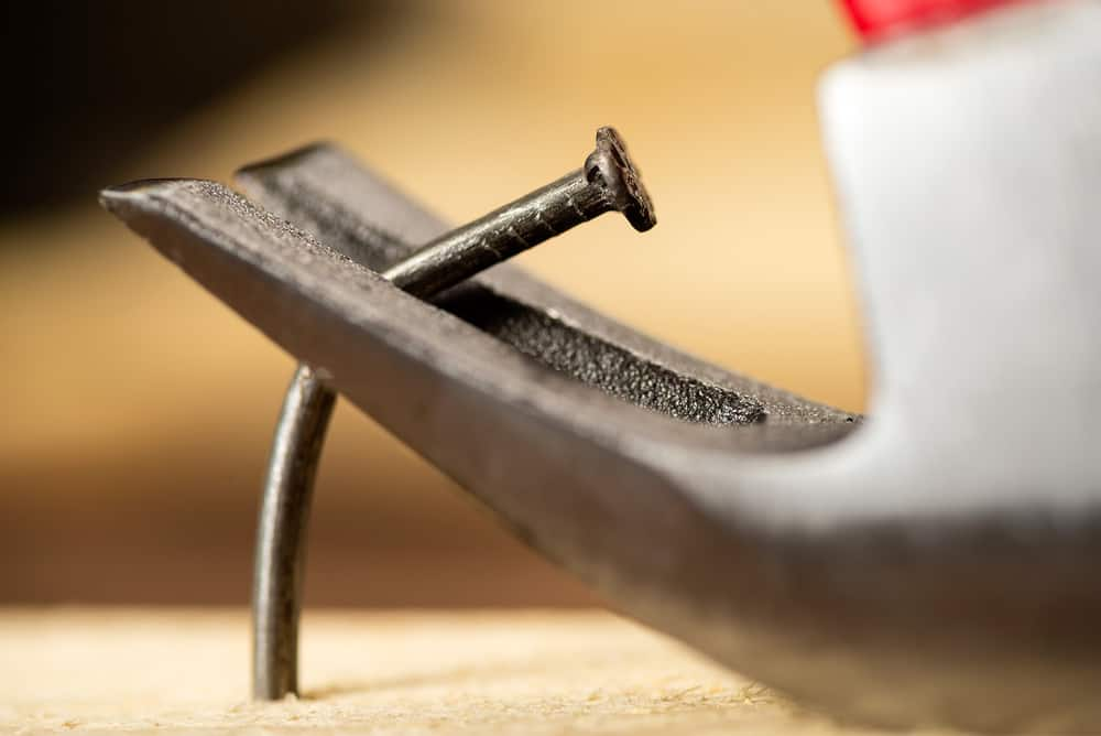 Pulling a bent nail of a wooden board with a hammer