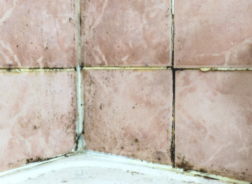 Mold tile joints with fungus due to condensation moisture problem. Black mold fungus growing in damp poorly ventilated bath areas